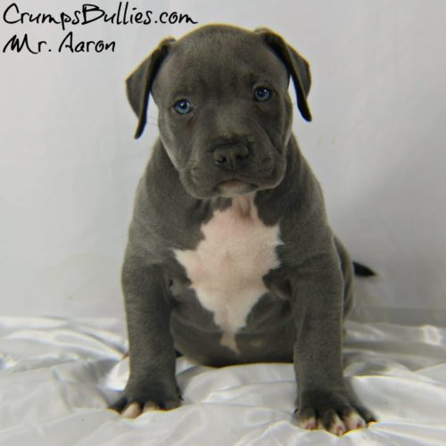 tri color bully puppies,tri pitbull puppies,blue tri color pitbulls for sale,blue tri color pitbull,pitbull bully puppies for sale,blue tri bully puppies for sale,am bully kennels,bully pups for sale,blue tri color pitbull kennels,blue tri color pitbull puppies for sale,blue fawn bully,standard bully pitbulls for sale,pocket bully kennels,monster pocket bullies,blue pitbull breeders,blue fawn pitbull puppies for sale,tri bully,blue eyed pitbull puppies for sale,tri color pit,fawn bully,pocket bully breeders,xxl pitbulls for sale,fawn pitbull puppies for sale,xxl pitbull puppies for sale cheap,xxl bully puppies for sale,tri color american bully puppies for sale,american bully pitbull puppies,small american bully puppies for sale,bully pitbull kennels,american bully pitbull for sale,pocket bully pitbull,american bully standard,blue tri pitbulls for sale,pitbull breeders in ga,bully puppies for sale near me,champagne bully,xxl american bully breeders,pocket pitbull for sale,pitbull bully,pocket bully pitbulls for sale,tri pitbull for sale,razor edge bully for sale,standard american bully for sale,tri color bully pitbull,xl bully pit,american bully pitbull,puppies for sale,pitbull puppy breeders,tri bully puppies,champagne tri bully,pitbull kennels near me,pitbull breeders florida,tri american bully,extreme pocket bullies for sale,blue bully puppies for sale,classic bully,bully for sale in ga,razor edge pitbull puppies for sale,chocolate tri bully,american bully extreme,champagne pitbull puppies for sale,fawn american bully,blue eyed pitbull for sale,local pitbull puppies for sale,american bully blue,american bully for sale ga,american bully dog for sale,american pocket bully breeders,purple tri pitbull,american bully xxl puppies for sale,standard american bully kennels,purple pitbull,tri color bullies puppies,extreme american bully,pocket bully puppies,blue tri color bully pitbulls,purple pitbull kennels,fawn pitbull puppies for sale 2018,champagne tri pitbull for sale,pitbull kennels in ga,tri blue pitbull puppies,blue nose bully pitbulls for sale,pitbull puppies bully breed,purebred pitbull puppies for sale,bully breed pitbull puppies for sale,american bully for sale near me,pocket american bully puppies,bullies puppies for sale,purple tri color pitbulls,blue pitbull puppies,bully blue nose pitbull kennels,xxl pitbull breeders,blue tri color pitbull puppies,xxl pitbull,merle pitbull puppies for sale 2018,xl bully pitbull puppies,bully pitbulls puppies for sale,bully dog pitbull puppies for sale,blue nose pitbull puppies for sale,bully pitbulls for sale in ga,blue bully pitbull puppies,xxl bully pitbull puppies for sale,blue fawn pitbull for sale,pitbull breeders,pit bull breeders,blue fawn pitbull,bully for sale in ga,american bully extreme,xxl pitbull kennels,bullies for sale,female pitbull for sale,xl bully puppies for sale,bully pitbulls,pit bull breeder,xl bully for sale,buff pitbull,top american pitbull kennels,american bully for sale in ohio,tri color bully for sale,purple tri pitbull,pitbull puppies for sale in georgia,tri bully for sale,blue pit for sale,tri color pitbulls puppies for sale,champagne tri color pitbull puppies for sale,chocolate tri color pitbull puppies for sale,georgia pitbull breeders,block head pitbulls for sale,xxl bully pitbulls for sale,king gotti pitbull puppies for sale,bully dog for sale,pitbull kennel,all white pitbull puppies for sale,big pitbulls for sale,pitbulls for sale in georgia,xxl pitbull for sale,bully breeders,purple tri pitbulls for sale,xxl blue nose pitbull,xxl pits,bully pitbulls for sale,pitbull breeders in ga,fawn pitbull,best pitbull breeders,xxl bully puppies for sale,bully xxl,blue tri color pitbulls for sale,best bully pitbull kennels,bully puppies for sale in ga,tri color bully,xxxl bully,blue pitbull breeders,xl pitbull puppies,tri bully,xl bully puppies,pitbull puppy breeders,double xl pitbull,double xl pitbull,pitbull extreme,tri color bully puppies,blue pitbull puppies for sale near me,blue fawn puppies,top 10 pitbull bloodlines,american bully kennel,giant pitbull for sale,blue fond pitbull,gray pitbull puppies for sale,xl bullies,pitbull puppies for sale rochester ny,american bullies kennels,buff pitbulls,local pitbull puppies for sale,xl bully kennels,xl bullies for sale,xl bullies for sale,female blue pitbull,tri color bully puppies for sale,blue pitbulls for sale in georgia,tri color pitbull puppies for sale near me,king lion pitbull,blue pitbull puppies for sale in rochester ny,champagne tri bully for sale,blue fond pitbulls for sale,bully breeder,bullies for sale in ohio,tri bullys,blue brindle pitbull puppies for sale,monster bully pitbull,pitbull puppies for sale with papers,monster pitbulls,blue xxl pitbulls,bully pitbull puppies for sale in ohio,fawn pitbull puppies for sale 2018,blue tri bully,bully pitbulls for sale in ga,greyline pitbulls,xxl pit bull,tri color pitbulls,champagne bully,tri bullies,pit bull terrier puppies for sale,american bully puppies,american bully,bully puppies,american bully puppies for sale,american bully for sale,bullies for sale,xl american bully puppies for sale,bully pitbull puppies for sale,american bully xl,bully pitbull for sale,pitbull kennels,pitbull puppies for sale,american bully xl for sale,bully puppies for sale,xl bully puppies for sale,mvp bullies,bully pitbull puppies,pitbull puppies for sale in md,pitbull kennels nc,pitbull puppies for sale in nh,xl bully,pitbull puppies for sale in nc,xl pitbull,pitbull puppies for sale in wv,pitbull breeders in nc,pitbull puppies for sale in pa,bully dog for sale,bully pit for sale,bully pitbulls for sale,xxl american bully for sale,pitbull puppies for sale in ny,pitbull kennels in california,pitbulls for sale in nc,xl bully kennels,pitbull puppies for sale in nj,american bully kennels,american bully,breeders,american bully breeder,bullies for sale in texas,american bullies for sale,pitbull puppies for sale mn,champagne pitbull,bully kennels,american bully for sale in durban,xl bully kennels in california,bully pitbull kennels in nc,pitbull breeders in california,bully xl,mvp bullies,pitbull puppies for sale in va,pitbull puppies for sale in michigan,xl bully pitbull,purple tri color pitbulls for sale,pitbull puppies for sale in indiana,pitbull puppies for sale in tn,bully kennels in california,xl bully puppies for sale near me,tri color pitbulls for sale in texas,puppy american bully,xxl american bully for sale in south africa,bully for sale,bullys for sale,pitbull puppies for sale in ky,bully pit puppies for sale,blue pitbull puppies for sale in nc,mvp bullies,merle bully,pitbull breeders nj,purple tri bully puppies for sale,purple tri bully,puppies for sale in pa,pitbull puppies for sale in texas,bully puppy,pitbull breeders in kansas,black american bully puppies for sale,american bully breeders south africa,california pitbull kennels,american bully dog for sale,xxl bully puppies for sale uk,bullies for sale in nc,american bully kennels in texas,bully pups,pitbull puppies for sale in louisiana,pitbull puppies for sale in ma,xl bully for sale,bully pups for sale,xl pitbull puppies for sale,american bully for sale in nj,bully kennels in texas,pitbull breeders in texas,pitbull breeders california,puppies for sale in michigan,american bully pitbull puppies for sale,pitbulls for sale in md,small american bully puppies for sale,am bully puppies,merle bully puppies for sale,american bully breeders in canada,american bully for sale in mn,american bully price,pitbull puppies,pitbull puppies for sale,xl pitbull,xxl pitbulls,pitbull kennels,xl pitbulls,manmade kennels,xxl pitbull puppies for sale,xxl pitbull,xl pitbull,black pitbull puppies for sale,pitbull puppy,blue nose pitbull puppies for sale,xl pitbulls for sale,pitbull breeders,xl pitbull puppies for sale,pitbull for sale,xl pitbulls,xxl pitbulls for sale,pit bull puppy,pit bull puppies,pitbull kennels near me,xl bully puppies,pitbull puppy for sale,champagne pitbull,pitbulls for sale near me,xxxl pitbull,pitbulls for sale,xxl pitbull puppies,xl bully,xl bully pitbull,xl pitbulls for sale,blue nose pitbull,puppy pitbulls,pitbull dog for sale,pitbull dog for sale,champagne pitbull,pitbull breeders near me,pitbull pups for sale,bully pitbulls for sale,blue nose bully,xl pitbull puppies,champagne pitbull puppies for sale,xl pitbull kennels,champagne pitbull puppies,xl blue nose pitbull,pitbulls puppies for sale,xl pitbull puppies for sale,pit bull puppies for sale,pitbull terrier,xl pit,bully kennels near me,xxl pitbull for sale,xl bully for sale,pitbull xxl,pit bulls for sale,pitbulls puppies,xxl pitbull puppies for sale cheap,xxl pitbull puppies for sale cheap,rare pitbulls for sale,xl bulldog,xl red nose pitbull puppies for sale,xl bully puppies for sale,bully pit puppies,bully pitbull puppies,xxl bullies,pit puppies for sale,solid black pitbull puppies for sale,xl revolution pitbulls,american pitbull xl,xxl pitbulls puppies for sale,xxl pit bull,puppy pitbull,blue pitbulls for sale,black pitbull puppy,xxxl pitbulls,pitbull puppys,blue pitbull puppies for sale,best pitbull breeders,pitbull puppies for sale near me,pit bull breeders,blue xxl pitbulls,pitt bull puppies for sale,red nose pitbull,chocolate tri color pitbull puppies for sale,xl bully pit,xxl bully pitbull,pitbull kennel,red nose bully,xxl bullies,pitbull pups,pitbull bully puppies,blue bully pitbull puppies for sale,xl american bully puppies for sale,american red nose pitbull,blue pitbull puppy,purebred pitbull puppies for sale,pit puppies,blue nose pitbull terrier,pit puppy,hoobly,craigslist, puppyfind,hoobly pets,facebook,amazon,twitter, instagram, pinterest,ukc,abkc,nba,nfl,nhl,cnn,comcast,xfinity,youtube,apple,iphone,samsung,microsoft,xboxlive,xboxone,yahoo,reddit,msn,fae,kahoot,kik,netflix,finest pitbull,bossykennel,topdog,crumpsbullies,mvpbullies,ace,shorty,NEWAGE PITBULLS, XTREME BULLY PITBULLS, ROYAL BLUE GENERATIONS KING LION, GOTTILINE, BOSSY KENNELS, XXL PITBULLS, TOPDOG BULLIES, ROYAL FAMILY BULLIES, GATEKEEPER KENNELS, PUPPIES, BLUE NOSE PITBULLS, PUPPIES FOR SALE, PUPS, PITBULL PUPPIES, BULLIES,puppies for sale,puppies,puppy,pitbull,puppy finder,puppies for sale near me,pictures of puppies,pitbull,pitbull puppies,blue nose pitbull,american pitbull terrier,pitbulls and parolees, pitbull puppies for sale,bully pitbull,red nose pitbull,pitbulls for sale,american pitbull,baby pitbulls,blue nose pitbull puppies for sale,hulk pitbull,american bully,american bully puppies,american bully for sale,bully pitbulls,bully pitbull for sale