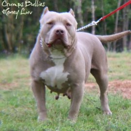 bully pit
