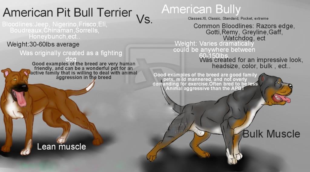 pitbull-vs-bully