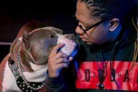 American Pitbull Terrier xl pitbull