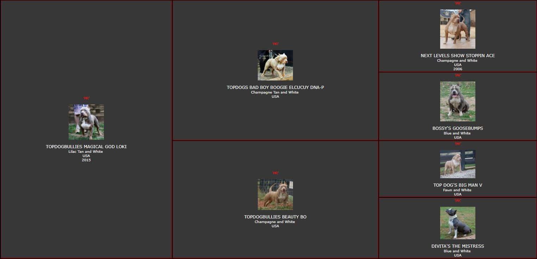 tri color bully puppies,tri pitbull puppies,blue tri color pitbulls for sale,blue tri color pitbull,pitbull bully puppies for sale,blue tri bully puppies for sale,am bully kennels,bully pups for sale,blue tri color pitbull kennels,blue tri color pitbull puppies for sale,blue fawn bully,standard bully pitbulls for sale,pocket bully kennels,monster pocket bullies,blue pitbull breeders,blue fawn pitbull puppies for sale,tri bully,blue eyed pitbull puppies for sale,tri color pit,fawn bully,pocket bully breeders,xxl pitbulls for sale,fawn pitbull puppies for sale,xxl pitbull puppies for sale cheap,xxl bully puppies for sale,tri color american bully puppies for sale,american bully pitbull puppies,small american bully puppies for sale,bully pitbull kennels,american bully pitbull for sale,pocket bully pitbull,american bully standard,blue tri pitbulls for sale,pitbull breeders in ga,bully puppies for sale near me,champagne bully,xxl american bully breeders,pocket pitbull for sale,pitbull bully,pocket bully pitbulls for sale,tri pitbull for sale,razor edge bully for sale,standard american bully for sale,tri color bully pitbull,xl bully pit,american bully pitbull,puppies for sale,pitbull puppy breeders,tri bully puppies,champagne tri bully,pitbull kennels near me,pitbull breeders florida,tri american bully,extreme pocket bullies for sale,blue bully puppies for sale,classic bully,bully for sale in ga,razor edge pitbull puppies for sale,chocolate tri bully,american bully extreme,champagne pitbull puppies for sale,fawn american bully,blue eyed pitbull for sale,local pitbull puppies for sale,american bully blue,american bully for sale ga,american bully dog for sale,american pocket bully breeders,purple tri pitbull,american bully xxl puppies for sale,standard american bully kennels,purple pitbull,tri color bullies puppies,extreme american bully,pocket bully puppies,blue tri color bully pitbulls,purple pitbull kennels,fawn pitbull puppies for sale 2018,champagne tri pitbull for sale