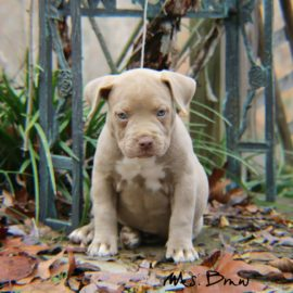 Puppys for sale