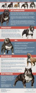 bully breed